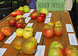 apple day brighton