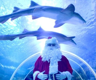Christmas holiday events for families brighton